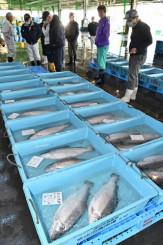 海面養殖された「宮古トラウトサーモン」。高値が付き、関係者は2年目へ期待を高める=4月、宮古市臨港通・市魚市場