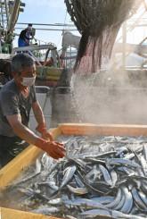 大船渡市魚市場に今季初めて水揚げされたサンマ=29日午前6時47分、同市大船渡町