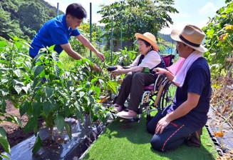 芝生の通路が設置された農園で、車いすに乗りながら野菜の収穫を楽しむ斉藤栄子さん(中央)と藤嶋祐二郎副代表(左)ら