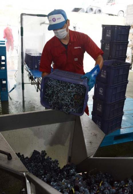 良質なワインを期し仕込み作業に臨むエーデルワインの社員