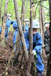 丁寧に木を除伐する末崎中の生徒