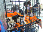 保護犬猫 進まぬ譲渡 県内、コロナ感染確認後に激減