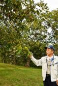 観光栗園 10年ぶり再開 一関・花泉、19日から営業
