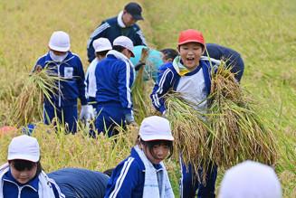 「よいしょ」。歓声を上げ、稲刈りに励む児童たち=18日、一関市藤沢町黄海