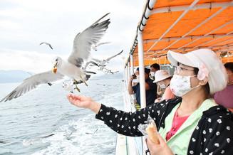 みやこ浄土ケ浜遊覧船でウミネコへの餌付け体験をする関係者