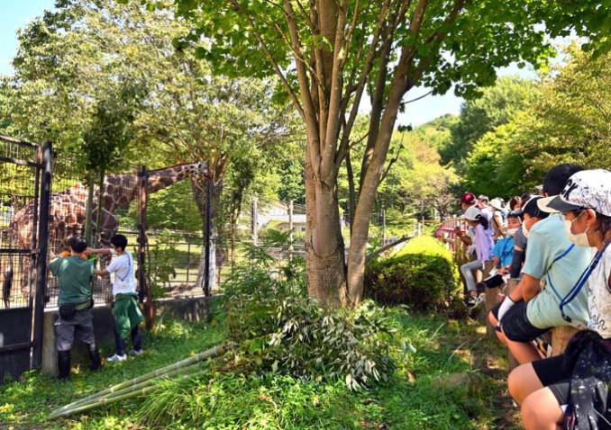 自分たちが集めた柳の葉をキリンに与える様子を見つめる来園者ら(右側)
