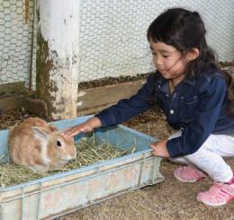 ウサギとの触れ合いコーナー