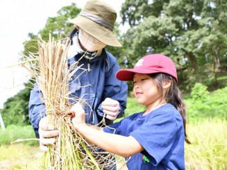 刈り取った稲の束を固く結ぶ親子