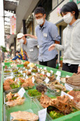 県内のキノコ収穫低調 厳しい暑さ影響か