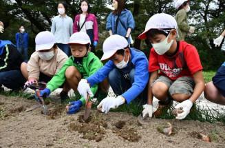来春の開花を心待ちにしながら、スイセンの球根を植える児童