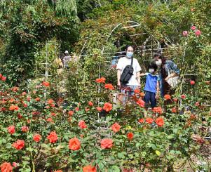 色鮮やかな花が楽しめる花巻温泉のバラ園