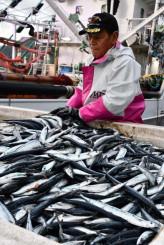 新浜町魚市場に今季初めて水揚げされたサンマ