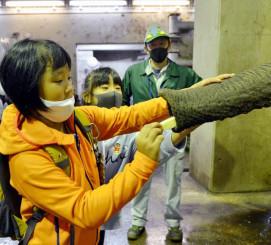 アフリカゾウのマオと触れ合う菅井絢音さん