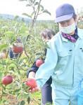 農福連携 リンゴ収穫体験 奥州の支援学校
