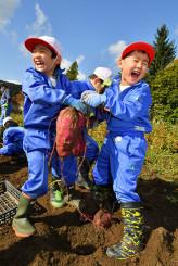 収穫したサツマイモを手に歓声を上げる田山小児童=13日、八幡平市下モ川原