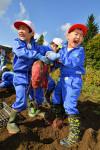 「大きい秋」見つけた 八幡平市・児童がサツマイモ収穫