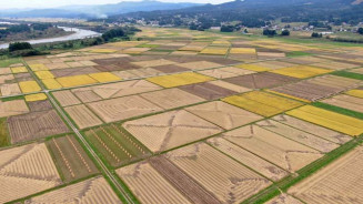 奥州市前沢生母地区の田んぼに浮かび上がった、さまざまな幾何学模様(本社小型無人機から撮影)
