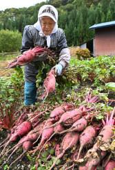 色鮮やかな安家地大根の収穫に励む小呂舘セイさん=19日、岩泉町安家