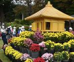 中尊寺 来客迎える菊鮮やか 来月15日までまつり