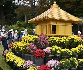 金色堂のオブジェを彩る黄色や紫色の菊=22日、平泉町平泉・中尊寺