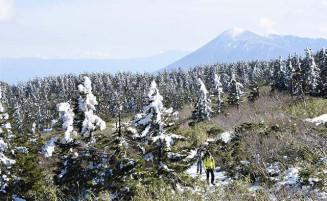 雪化粧したアオモリトドマツが青空に映える八幡沼周辺=28日、八幡平市