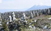 八幡平は冬の装い 本州初、盛岡で初霜