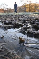 厳しい冷え込みとなり、田んぼに張った氷=31日午前7時53分、盛岡市薮川