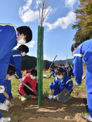 津波到達点にエドヒガンの苗木を植える西南中の生徒たち
