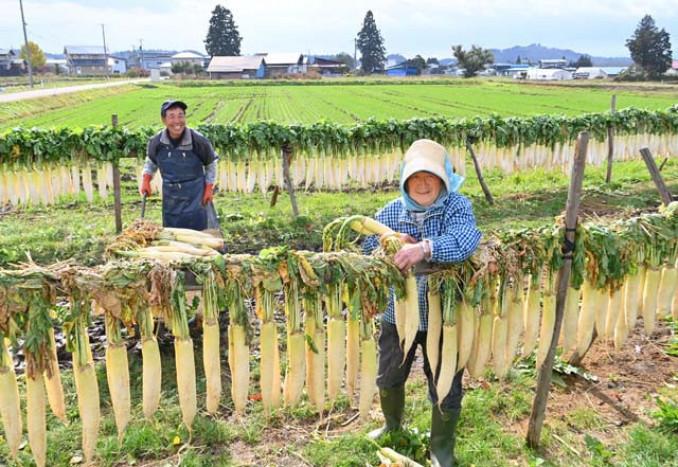 干し大根作りに励む西葛馨さん、裕子さん夫妻=6日、紫波町東長岡