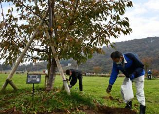 サトザクラの根元に肥料を埋め、成長を願う参加者