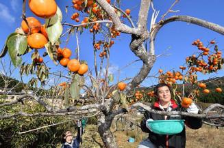 青空の下、柿の収穫に励む大船渡市観光物産協会の職員=12日、同市三陸町越喜来