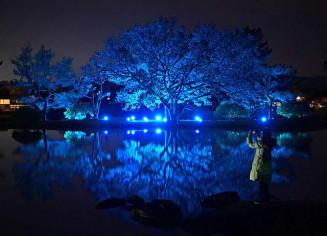 青い光で夕闇に浮かび、水面に映り込む木々=13日午後5時26分、平泉町平泉・観自在王院跡(報道部・山本毅撮影)