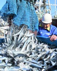 東日本大震災後最多となる713トンが水揚げされ、活気づく大船渡市魚市場=14日、同市大船渡町