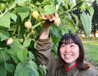 ホオズキ栽培を研究する傍ら、需要拡大に向け商品開発にも挑む村上一江さん