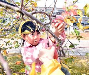 丁寧に「ユーミンのりんごの樹」のリンゴをもぎ取る園児