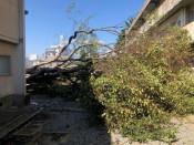 倒木の危険 最大250本 盛岡市内の小中学校、年度内に伐採へ