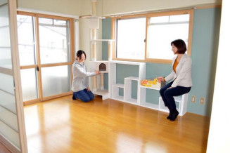 キャットウオークやキャットステップが設置された「シェアねこ賃貸」の1室=盛岡市材木町