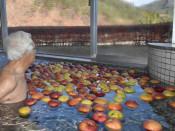 心身癒やす リンゴ風呂 宮古・湯ったり館