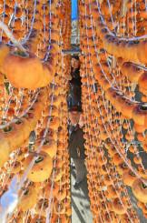 整然とつるされ、寒風に揺れる「おいまつ柿」=24日、一関市花泉町老松(報道部・山本毅撮影)