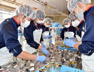 缶詰め製造実習で加工したサバを缶に詰める西和賀高の生徒