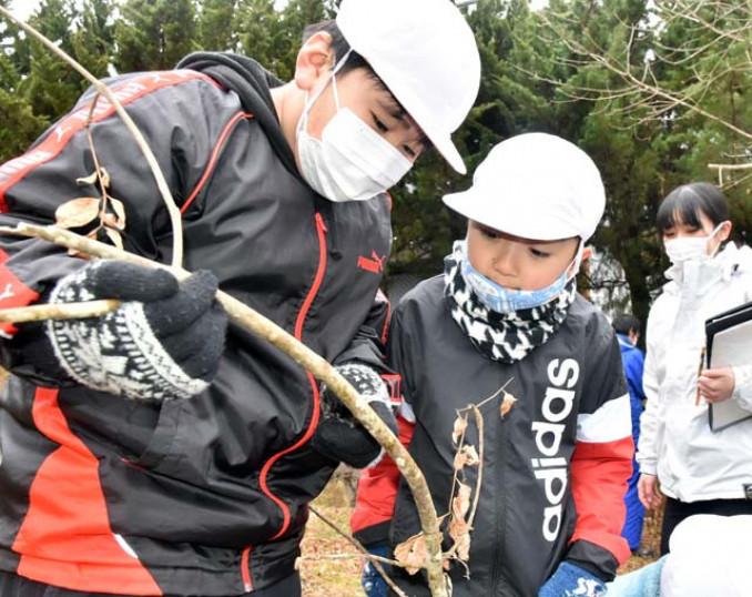 閉校前最後の産卵数調査で念入りに枝に産み付けられた卵を探す亀岳小の児童