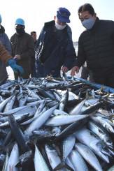 久慈港に入港した巻き網船から水揚げされたサバ