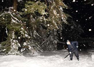 雪の影響で拝観を停止している毛越寺。境内の木々は雪の重みで曲がった=17日、平泉町平泉