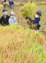 奥州市で稲刈りを体験する子どもたち=9月