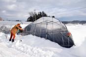 農業施設 大雪被害重く 県南部、ハウスなど損壊650件超