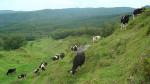 全国に3軒しかない山地酪農家を増やしたい