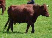 牛の種類を学ぼう