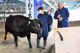 肥育した牛をトラックに積み込む若手生産者(左)。部会員と「江刺牛」のブランド向上へ力を入れる