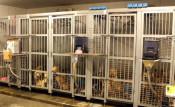 狭い室内で犬20匹飼育 愛護法違反疑い、宮古の女逮捕