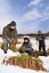 一面が雪で白く覆われる中、掘り出された雪下ニンジン=20日、岩手町久保